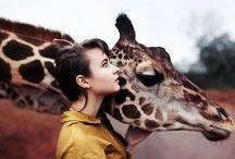 Giraffes Are Love / by Lara Elizabeth