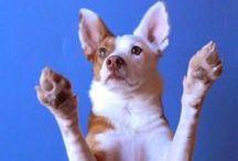 Trick Dog! / by Lara Elizabeth
