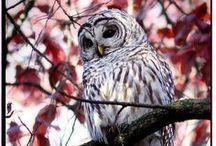 Owl I Want is You / Owls  / by Lara Elizabeth