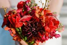 Red / by Wedding Paper Divas