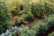 How Does your Garden Grow? / Ideas for my garden / by Amy Nogar - My Happy Crazy Life