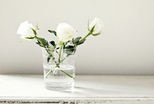 Flowers / by Claudia Zinzan | Father Rabbit Limited