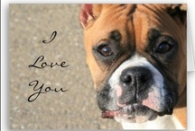 Boxers & other four legged friends  / by Lady Roberts
