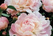 Gardening / by Tina Bogle