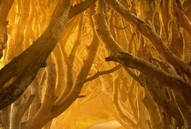 Trees / by Marcy Prager