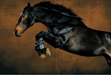Horses / by Somebody