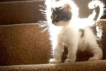 Kitty love <3 / by Jillian Howard