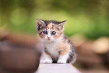 Kitten / by Akira Sawai