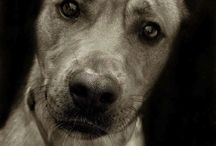 Dogs <3 / by Emily Ferrando