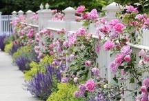 Garden / by Amber Leathem