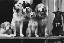 V.F. Pets / by VANITY FAIR