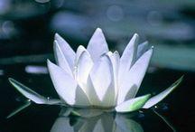 Buddhism / zen life / by michelle araujo