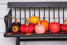 halloween decor & treats / by Gina Lenczycki