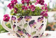 Edible Violas/Violets / by Aurora Kangaspuu