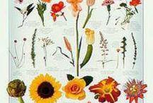 Eat Your Flowers / by Aurora Kangaspuu