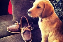 DOGS & puppies:)<3 / by Maddie Theisen