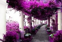~Garden~ / by Desiree Montoney