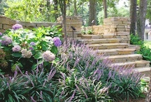 Best Groundcovers / by Southern Living Plant Collection