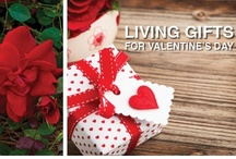 Valentine's Day / by Southern Living Plant Collection
