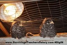 Chickens / by Surviving a Teacher's Salary