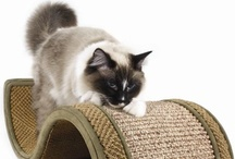Holiday Gift Ideas for Your Kitty / by PetSolutions Pet Supplies