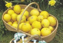 100% bergamotes / La bergamote est le fruit du bergamotier, arbre, de la famille des Rutacées principalement cultivé en Calabre (Italie). Selon Giorgio Gallesio elle serait issue d'un croisement entre une orange amère et une lime (aussi appelée citron vert). Ce fruit ressemble à une petite orange à la chair verdâtre et à la peau lisse et épaisse, de couleur jaune à maturité. Sa chair est légèrement acide et amère, on emploie uniquement le zeste. Il pèse entre 80 et 200 grammes. / by Hélène Braconnier