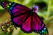 Butterflies & Bugs / God has created beauty in even the smallest life forms. / by Lori Good