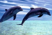 Dolphins!!!!! / by Grace Ruedger