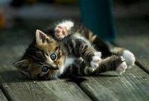 cats / by Abby McKibben