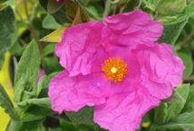 Sunny garden dreams / Plants and design ideas for the sunny spots in your garden / by My Garden Nursery