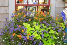 Gardens Flowers Landscapes / flowers, plants, landscapes, decks, patio, outside furniture / by Alice Gully