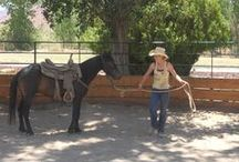 Working Ranch at SRR / by Sorrel River Ranch Resort & Spa