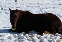 Winter Vacation / by Sorrel River Ranch Resort & Spa