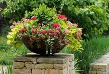 Gardening ~ Flowers / by Suzanna Barkett