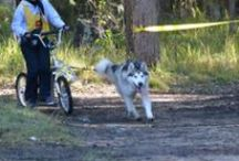 Dog Scootering / Most dogs love to run and run you may spend most of your walks trying to recall them, or chasing around after them, or if you own a Siberian Husky or Alaskan Malamute, being dragged around on the lead by them! So why not dog scooter?  / by Snowpaw Store