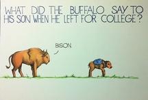 funny / by Elizabeth Goodnite