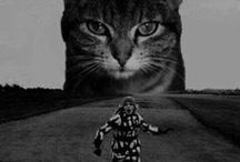 """Planet MEOW / Take me to your leader(Hissss) Also see my board """"RETURN TO PLANET MEOW"""" / by kat DeBlois"""