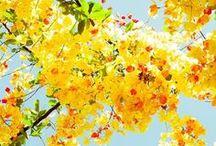 i heart flowers  / flowers / by Seven Cherubs