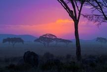 Orange/Purple Combos / by Barb Lancaster