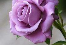 beautiful flowers / by Jane Ann Britt