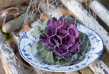 Cloches / by Blessed Little Thistle