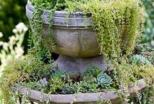 Plantas, jardines, patios / by Pandomonium