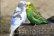 MY Birdies / parakeets and finches / by Janet Marsh
