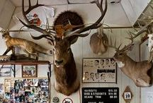 Taxidermy / by Buffalo Ranch