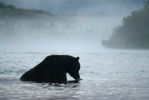 Wildlife / by Buffalo Ranch