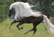 Horses / by Julie Seidel