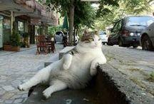 Cats Everywhere (=^.^=) ❤ / by Marina Ortiz