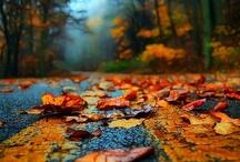 Fall / by Teresa
