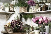 The Garden Shed / by Teresa