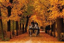 Autumn / by Bobbie Gross Andrews
